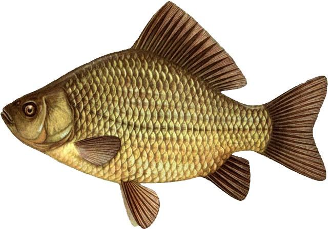 Пруд.Рыба со своего огорода.