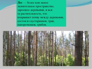 Лес— более или менее значительное пространство, заросшеедеревьями, и вся та