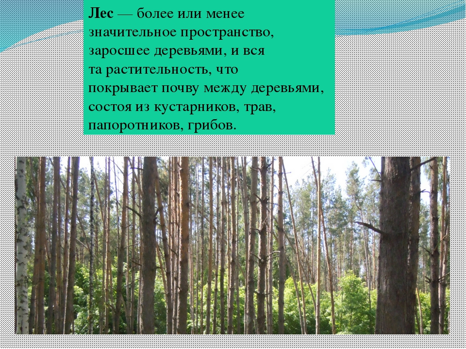 Лес— более или менее значительное пространство, заросшеедеревьями, и вся та...