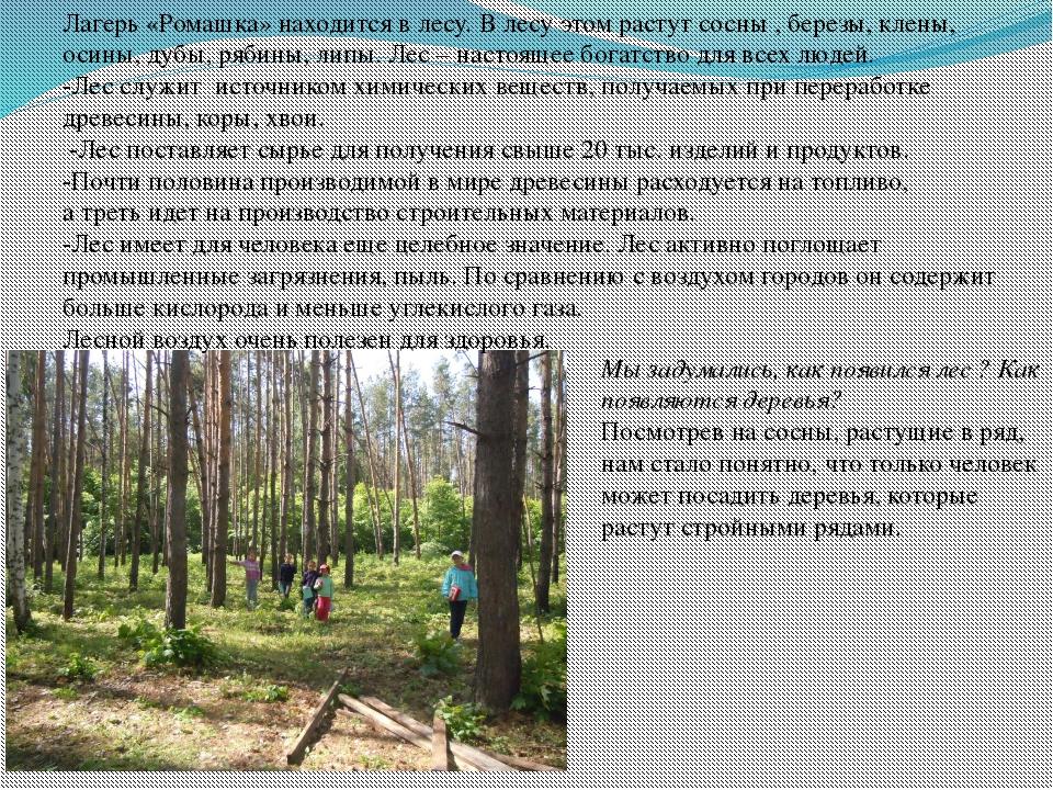 Лагерь «Ромашка» находится в лесу. В лесу этом растут сосны , березы, клены,...