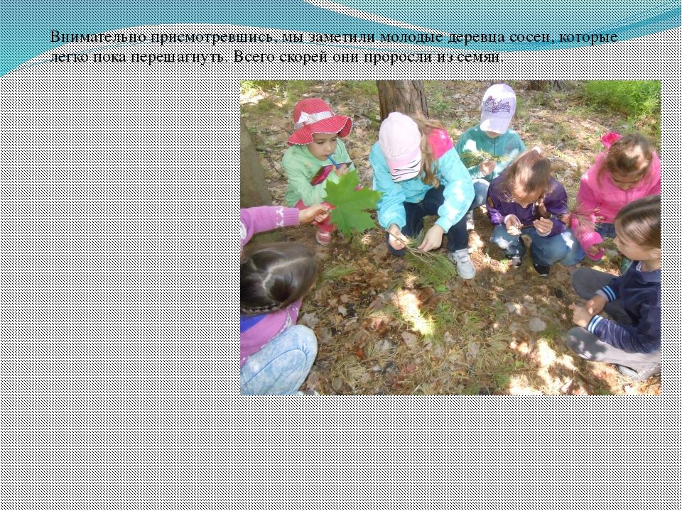 Внимательно присмотревшись, мы заметили молодые деревца сосен, которые легко...