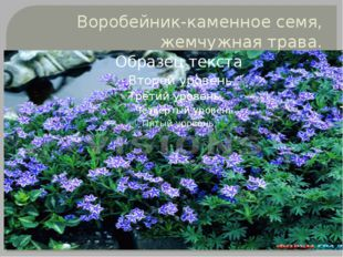 Воробейник-каменное семя, жемчужная трава.