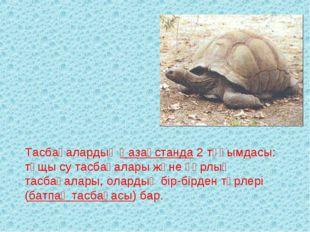 Тасбақалардың Қазақстанда 2 тұқымдасы: тұщы су тасбақалары және құрлық тасбақ