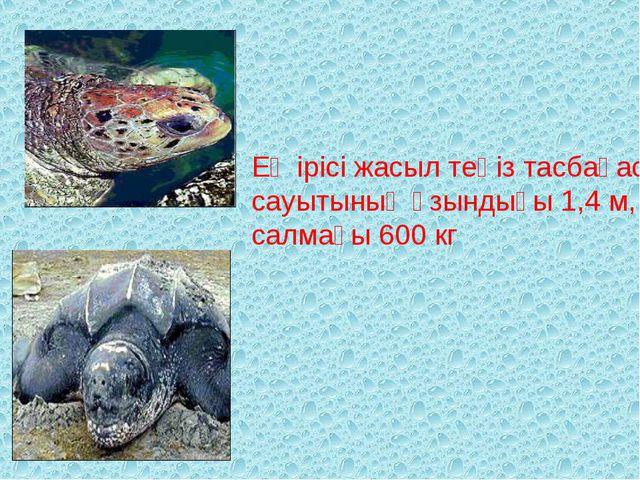 Ең ірісі жасыл теңіз тасбақасы сауытының ұзындығы 1,4 м, салмағы 600 кг
