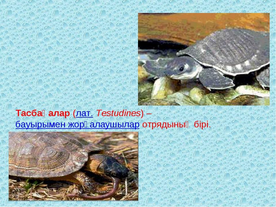 Тасбақалар (лат. Testudines) – бауырымен жорғалаушылар отрядының бірі.