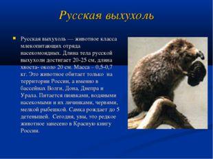 Русская выхухоль Русская выхухоль— животное класса млекопитающих отряда насе