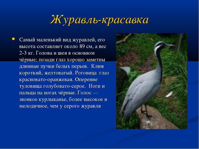 Журавль-красавка Самый маленький вид журавлей, его высота составляет около 89...