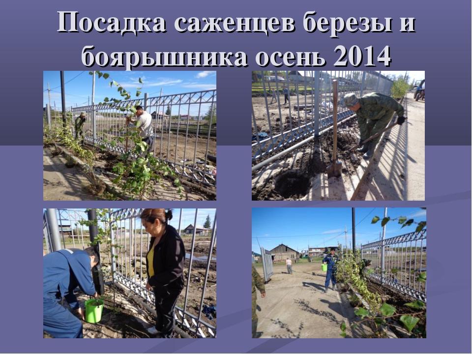 Посадка саженцев березы и боярышника осень 2014