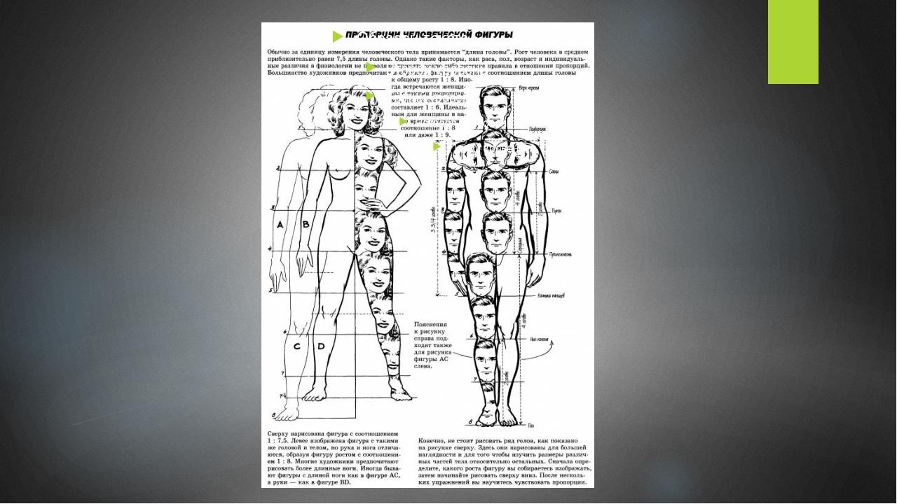 окошке пропорции человека относительно головы фото что пластика помогает