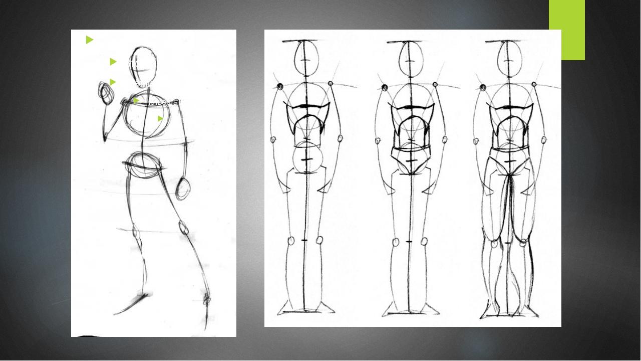 Пропорции фигуры человека картинка