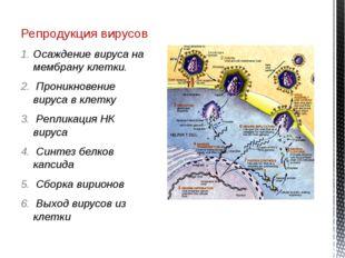 Репродукция вирусов Осаждение вируса на мембрану клетки. Проникновение вируса