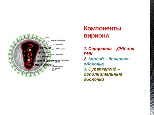 Компоненты вириона 1. Серцевина – ДНК или РНК 2. Капсид – белковая оболочка 3...