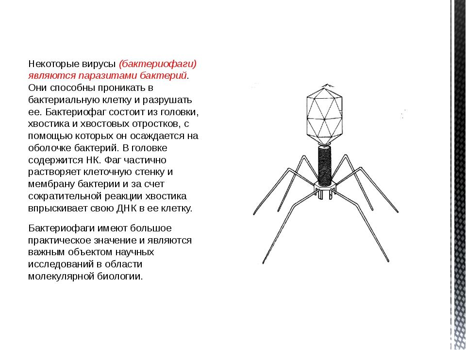 Некоторые вирусы (бактериофаги) являются паразитами бактерий. Они способны пр...