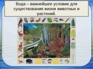 Вода – важнейшее условие для существования жизни животных и растений.