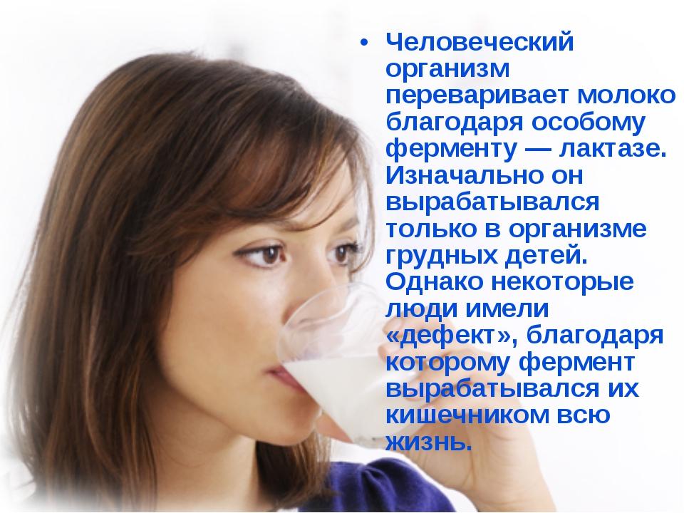 Человеческий организм переваривает молоко благодаря особому ферменту — лактаз...