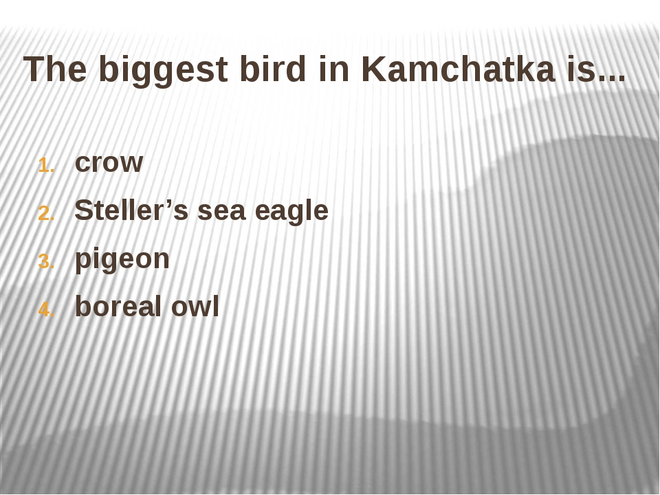 The biggest bird in Kamchatka is... crow Steller's sea eagle pigeon boreal owl