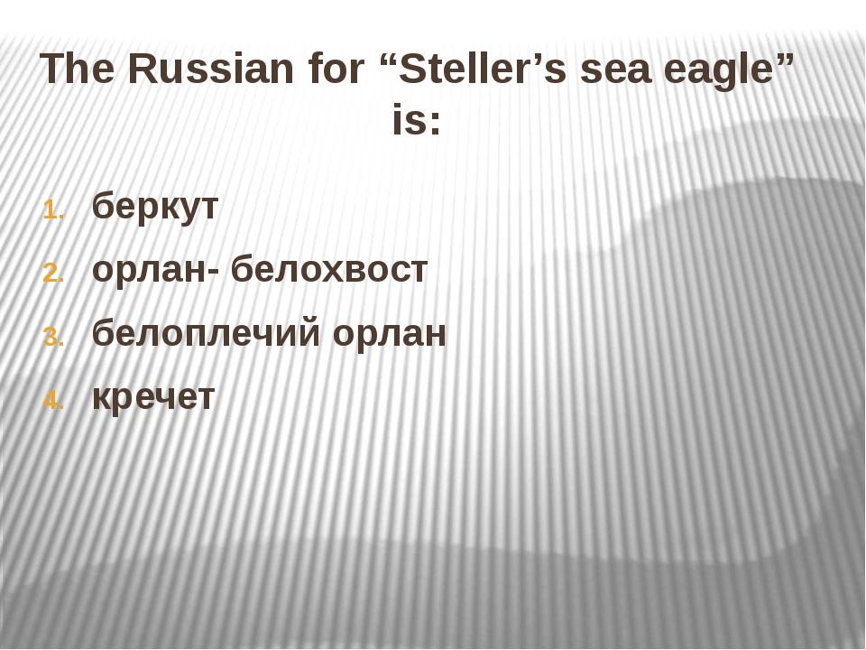 "The Russian for ""Steller's sea eagle"" is: беркут орлан- белохвост белоплечий..."