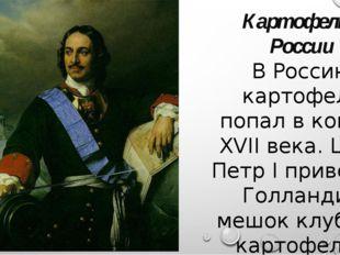 Картофель в России В Россию картофель попал в конце XVII века. Царь Петр I пр