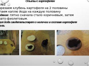Опыты с картофелем Опыт № 1 1) Разрезаем клубень картофеля на 2 половины 2) К