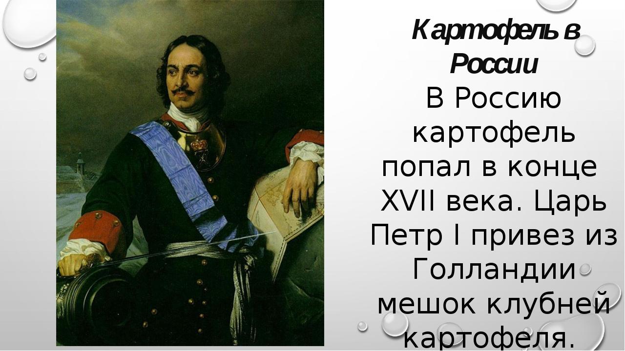 Картофель в России В Россию картофель попал в конце XVII века. Царь Петр I пр...