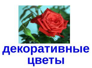 декоративныецветы