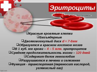 Красные кровяные клетки Безъядерные Двояковогнутый диск d = 7-8мм Образуется