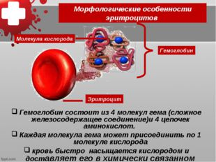 Морфологические особенности эритроцитов Гемоглобин состоит из 4 молекул гема