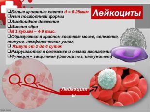 Лейкоциты 1500х Белые кровяные клетки d = 6-25мкм Нет постоянной формы Амебои