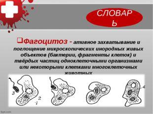СЛОВАРЬ Фагоцитоз - ативное захватывание и поглощение микроскопических инород