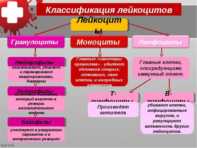 Классификация лейкоцитов Лейкоциты Нейтрофилы Эозинофилы Базофилы захватывают...