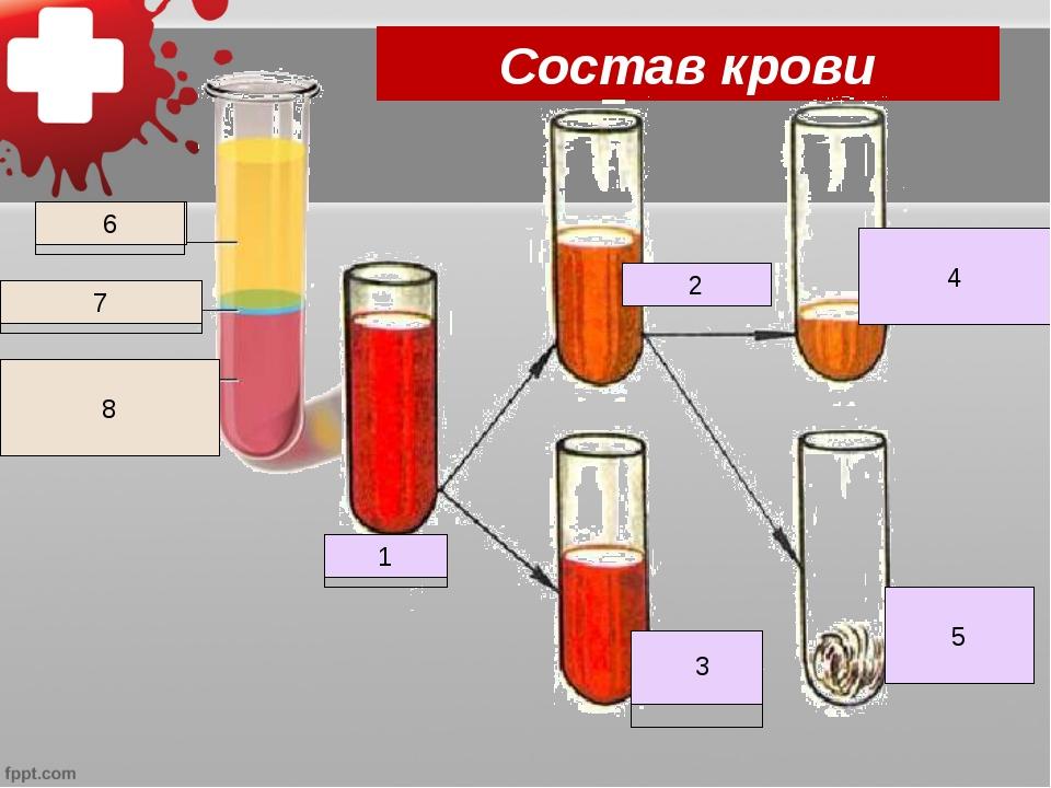 Состав крови Кровь 1 Плазма 2 Клетки крови Кровяная сыворотка 4 Белок фибрин...