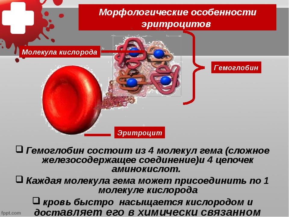 Морфологические особенности эритроцитов Гемоглобин состоит из 4 молекул гема...