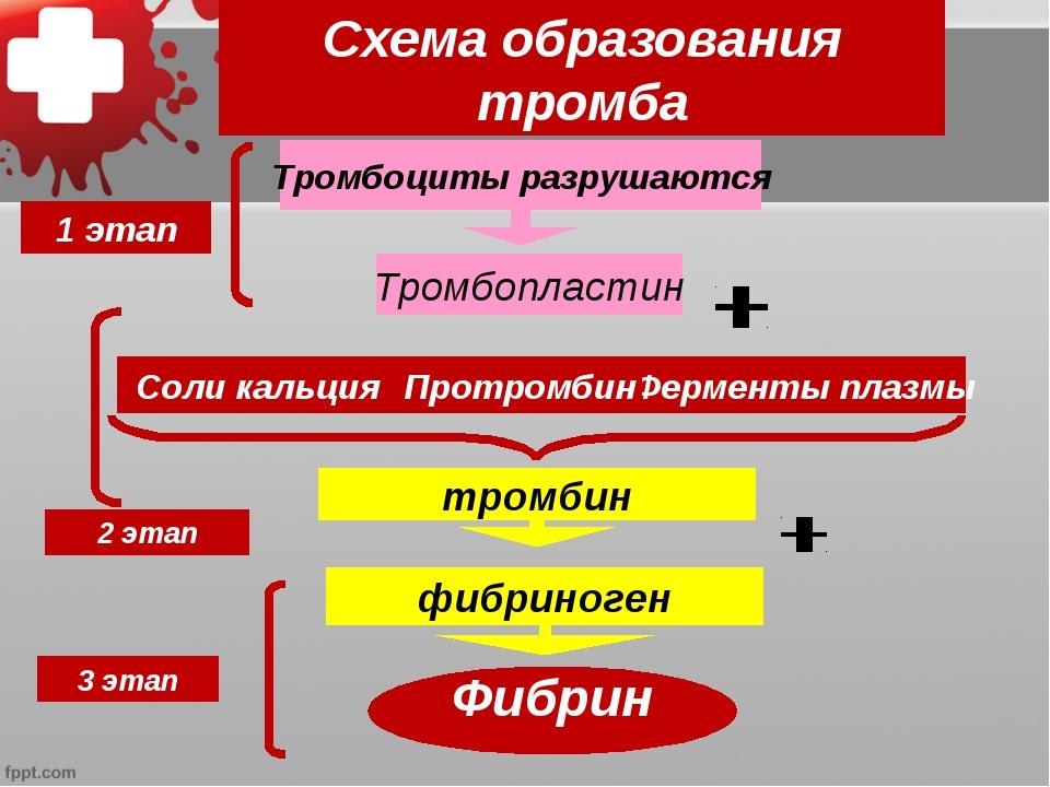 Схема образования тромба Тромбоциты разрушаются Тромбопластин тромбин фибрино...