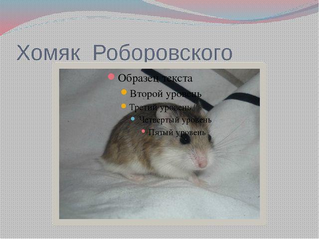 Хомяк Роборовского