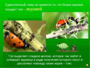 Единственный, кому не нравится то, что божья коровка поедает тлю – муравей. Т