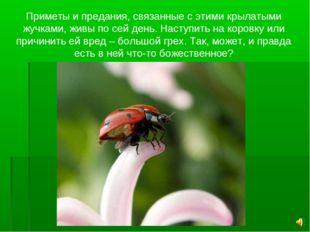 Приметы и предания, связанные с этими крылатыми жучками, живы по сей день. На