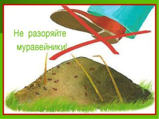 Не разоряйте муравейники!