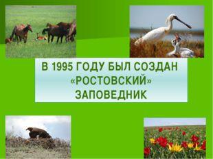 В 1995 ГОДУ БЫЛ СОЗДАН «РОСТОВСКИЙ» ЗАПОВЕДНИК