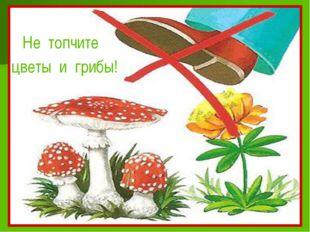 Не топчите цветы и грибы!