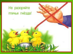 Не разоряйте птичьи гнёзда!