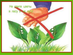 Не рвите цветы в лесу и на лугу!