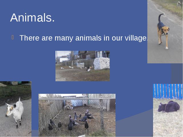 Animals. There are many animals in our village.