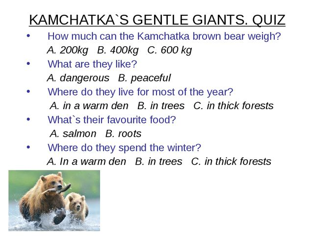 KAMCHATKA`S GENTLE GIANTS. QUIZ How much can the Kamchatka brown bear weigh?...