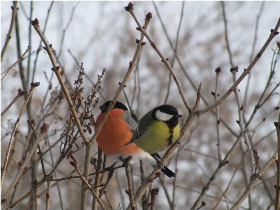 Картинки гифки природа зимняя и снегири летают желания