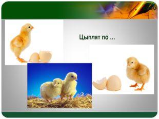Цыплят по … LOGO