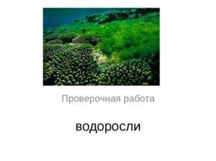 водоросли Проверочная работа