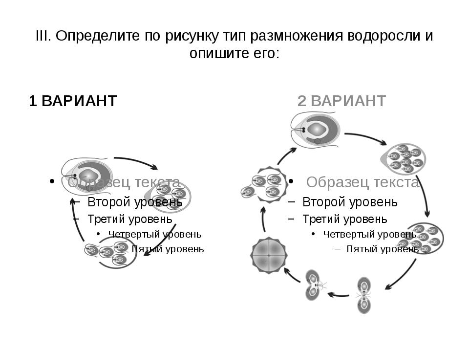 III. Определите по рисунку тип размножения водоросли и опишите его: 1 ВАРИАНТ...