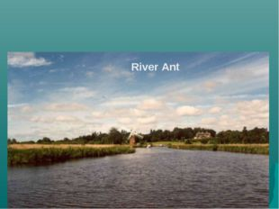 River Ant