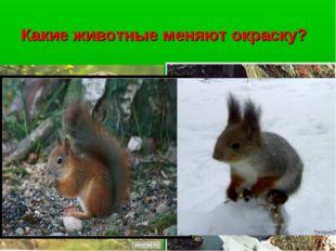 Какие животные меняют окраску?