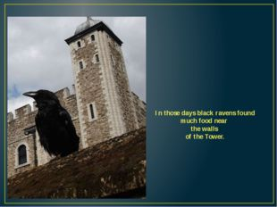 In those days black ravens found much food near the walls of the Tower.